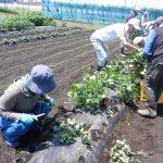病害虫防除 野菜作り講座
