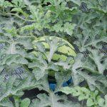 自然農法  野菜づくり講座